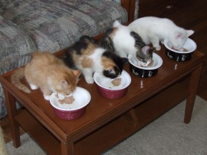 Sibling Allen, Rachel, Meghan, and Oliver.