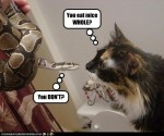 Cat-and-snake-discuss-mice
