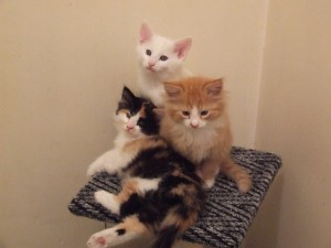 Rachel, Allen & Ollie as adorable kittens.
