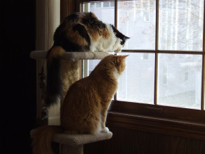 Rachel and Allen bird-watching.