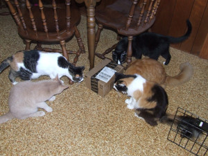 Ralph, Meghan, Spencer, Allen and Rachel can tell that box contains treats for them!