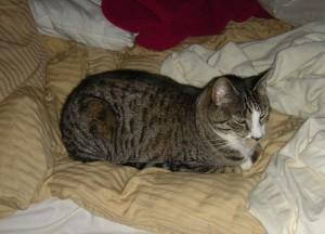 use diet not pepcid to manage feline nausea