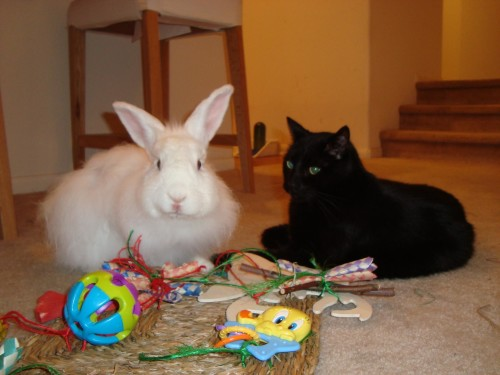"A CatCentric ""Ask the Expert"" Session: ""Rabbits and Cats: A dynamic duo or trouble waiting to happen?"""