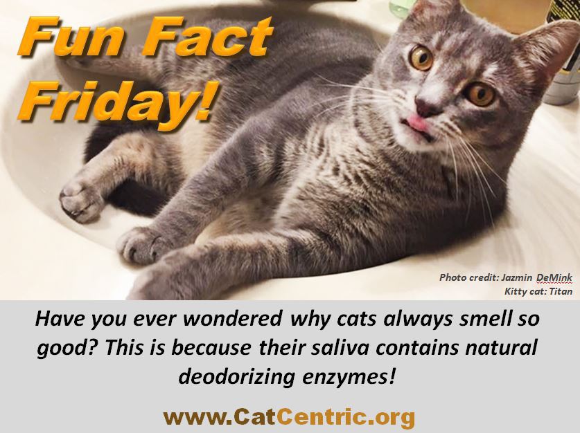 Fun Fact: Your cat's saliva contains deodorizing enzymes!